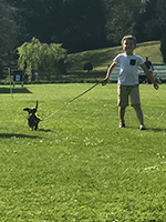 port-eliot-dog-show-4