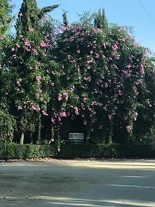 tree_blossom