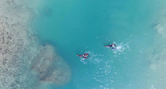 horses_in_the_water_aerial