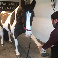 equine-rebalance-3