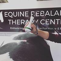 equine-rebalance-7